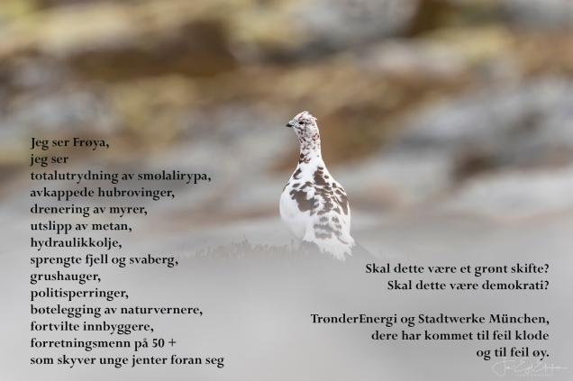 Lirypa, Jan Egil Eilertsen, Jeg ser, 23.08.19, JPG.jpg